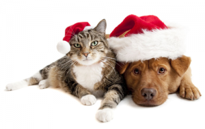 1-christmas-animals-1-1