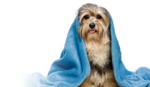 dog washb