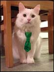 Cat tie2