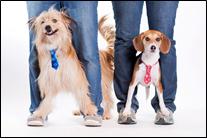 pets wearing ties